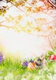 Påskkaninen med våren blommar, och easter ägg i blomning arbeta i trädgården Arkivbilder