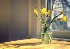 Påskliljor i solljuset Arkivfoton
