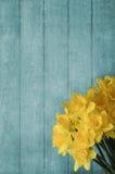 Påskliljor som framme blomstrar av Wood plankabakgrund för turkos Royaltyfri Bild