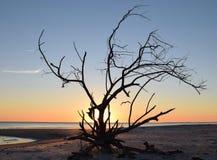 Pássaro dentro da madeira lançada à costa Imagens de Stock Royalty Free