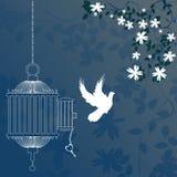 Pássaro e gaiola Foto de Stock