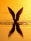 Pássaro na água Imagens de Stock Royalty Free