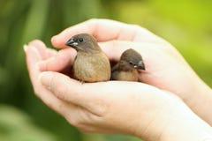 Pássaro na mão Imagens de Stock