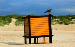 Pássaro só Foto de Stock Royalty Free