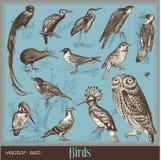 Pássaros Imagens de Stock Royalty Free
