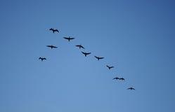 Pássaros Foto de Stock Royalty Free