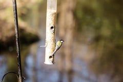 Pássaros com fome Foto de Stock