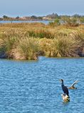 Pássaros de Camargue france no rio RhÃ'ne Imagem de Stock Royalty Free