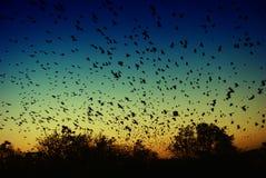 Pássaros do por do sol Fotografia de Stock