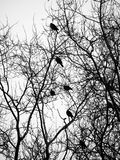 Pássaros e árvores Foto de Stock Royalty Free