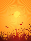 Pássaros e sol Fotografia de Stock