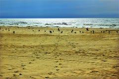 Pássaros em uma praia Fotografia de Stock