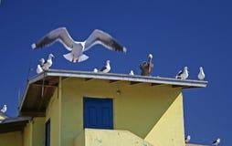 Pássaros na parte superior do telhado Imagem de Stock Royalty Free