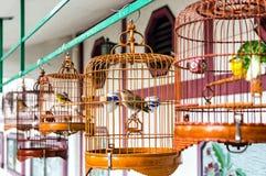 Pássaros nas gaiolas Imagens de Stock