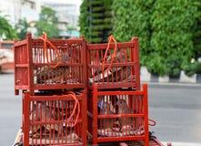 Pássaros nas gaiolas para fazer o mérito Imagem de Stock Royalty Free