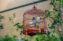 Pássaros nas gaiolas que penduram no jardim -12 do pássaro Imagens de Stock Royalty Free