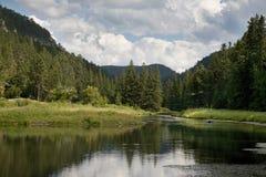 Pstrągowy strumień w Czarnych wzgórzach Południowy Dakota Fotografia Stock