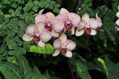 Pstrobarwne orchidee Zdjęcie Royalty Free