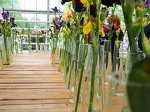 Pstrobarwny irys kwitnie w wazach, fiołek i żółty irys kwitnie w wazie Obrazy Royalty Free