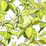 Psttern sans couture des branches avec les feuilles vertes Images libres de droits