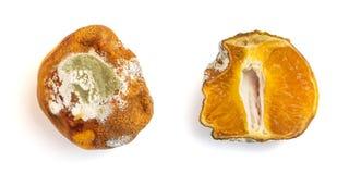 Psująca mandarynka z foremką na białym tle Cytrus owoc jest przegniła zdjęcie stock