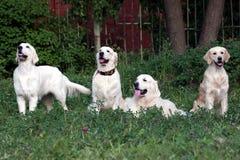 psy. obrazy royalty free