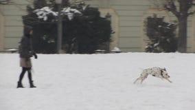 Psy bawić się w śniegu zbiory wideo