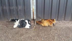 Psy czeka ich szefa fotografia royalty free