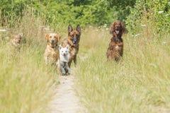 Psy czeka rozkaz Zdjęcia Stock