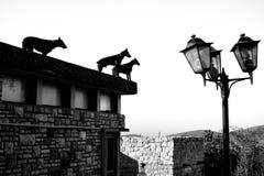 Psy i światła obraz royalty free