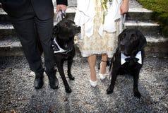 Psy i właściciele fotografia stock