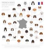 Psy krajem pochodzenia Francuza psa trakeny Infographic templa ilustracja wektor