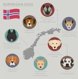 Psy krajem pochodzenia Norwegu psa trakeny Infographic tem ilustracja wektor