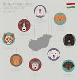 Psy krajem pochodzenia Węgra psa trakeny Infographic tem royalty ilustracja