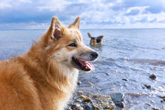 Psy na plaży zdjęcie stock