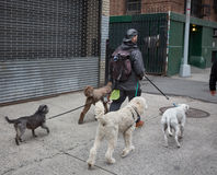 Psy na ulicach NYC Obrazy Stock