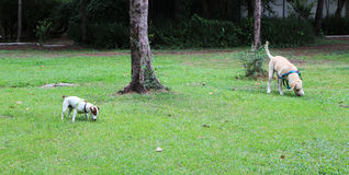 Psy na ziemi Obraz Stock