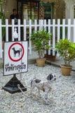 psy nie pozwolić Zdjęcia Royalty Free