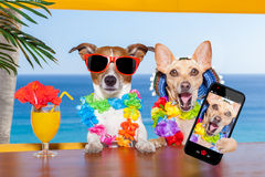 psy pijący fotografia royalty free