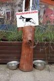 Psy pije punkt Obraz Royalty Free