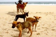 Psy przy plażą Zdjęcia Royalty Free