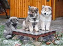 psy trochę Fotografia Royalty Free