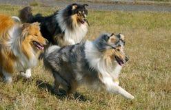 psy trzy fotografia royalty free
