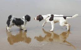 Psy uspołecznia trenować Obrazy Royalty Free