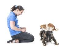 Psy, właściciel i posłuszeństwo, obrazy stock
