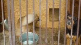 Psy w klatkach w psa schronieniu zbiory