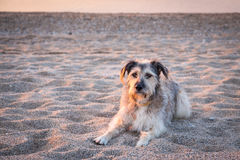 Psy w piasku Zdjęcie Royalty Free