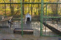 Psy w schronieniu Fotografia Royalty Free