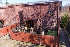 Psy w schronieniu Zdjęcia Royalty Free
