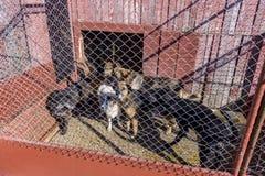 Psy w schronieniu Fotografia Stock
